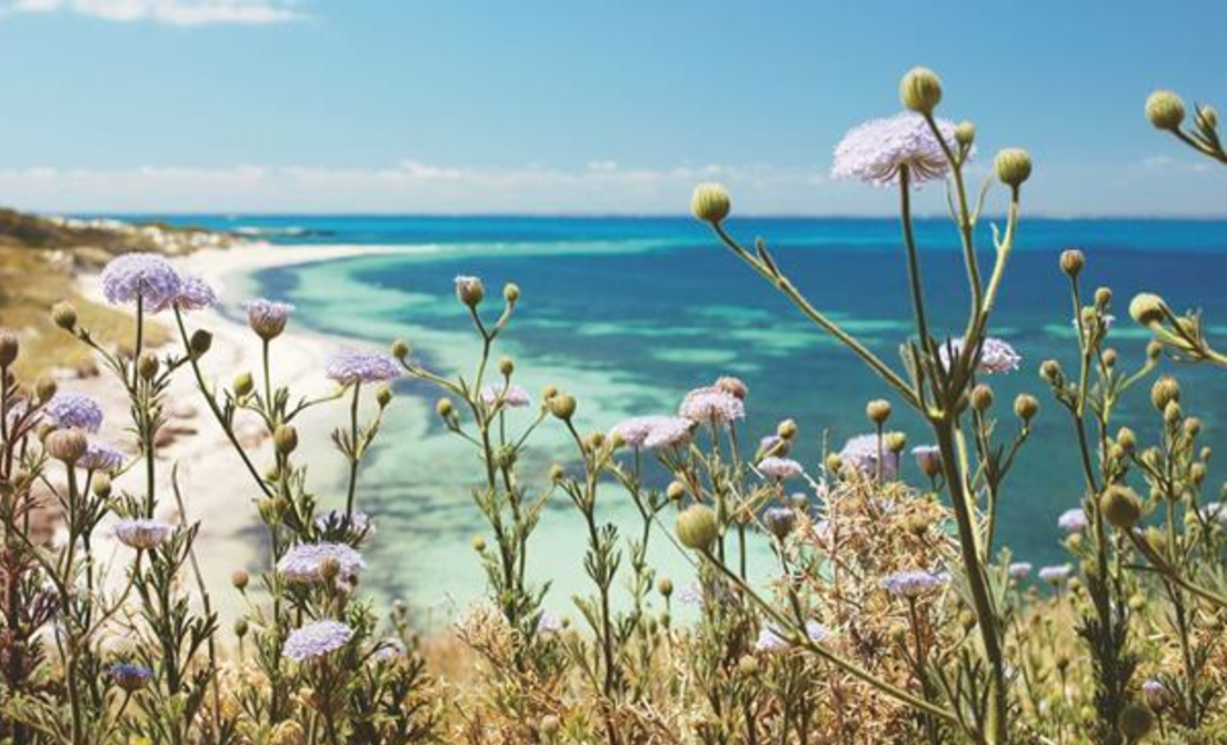 The Rottnest Island Daisies of Yanchep National Park, Sell My Car